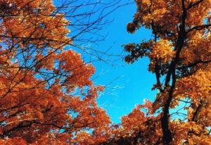 塩の山の紅葉