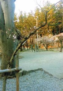 向嶽寺の桜