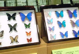 昆虫標本展