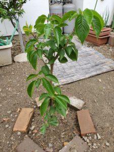 木を植えよう